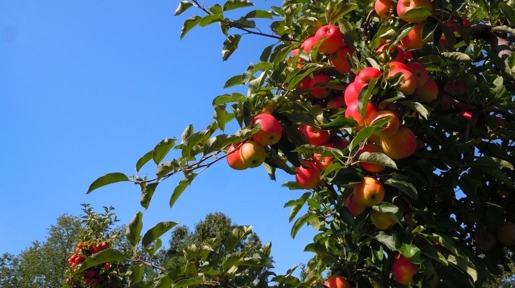Apple Tree and Sky