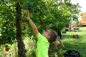 Volunteers moved mountains of food and picked produce during Hunger Action Month.