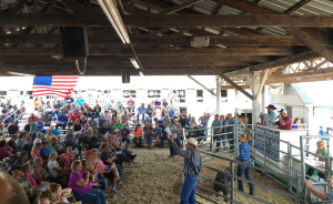 A crowd of people gather in a barn to bid on livestock.